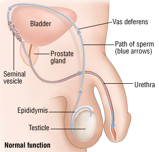 Cialis bladder cancer